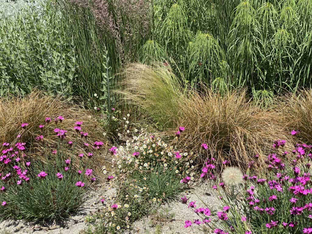 Gartenglück - Beet planen mit Gräsern und Stauden - in Pörnbach
